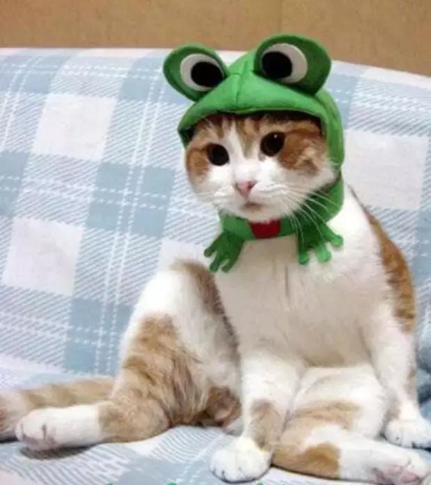史上最萌的猫咪时装秀,一票难求啊!