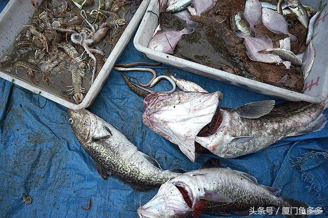 青岛南姜码头小海鲜大丰收 20种海捕货谁是你最爱