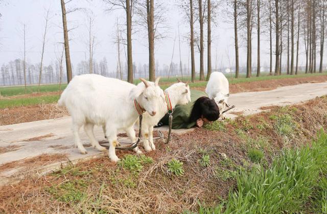 """张艺兴向小羊展示舞蹈的balance,呆萌的小羊却被他""""吓"""