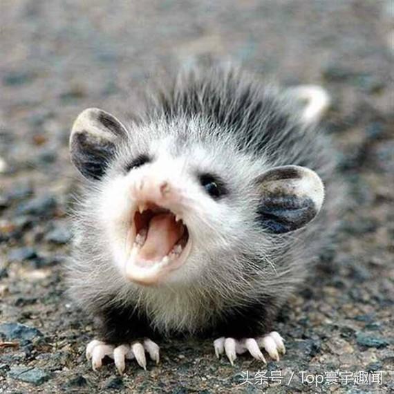 11只表情愤怒的动物,差点让人害怕