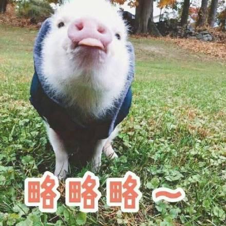 可爱小香猪表情包:亲亲嘛