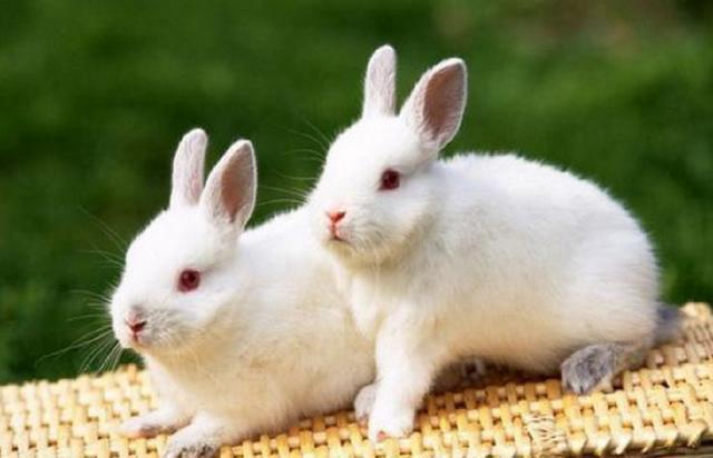 4组呆萌可爱的小兔子,你最喜欢哪一对?