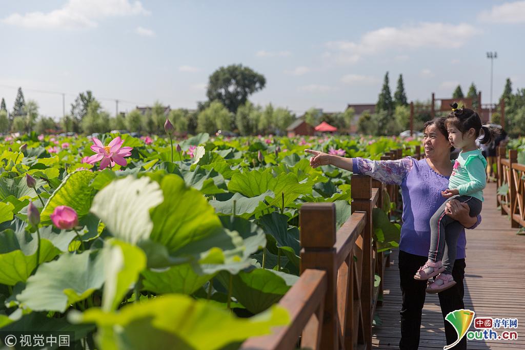 2018年6月23日,江苏南通,如皋市经济开发区平园池村荷花塘前游客在