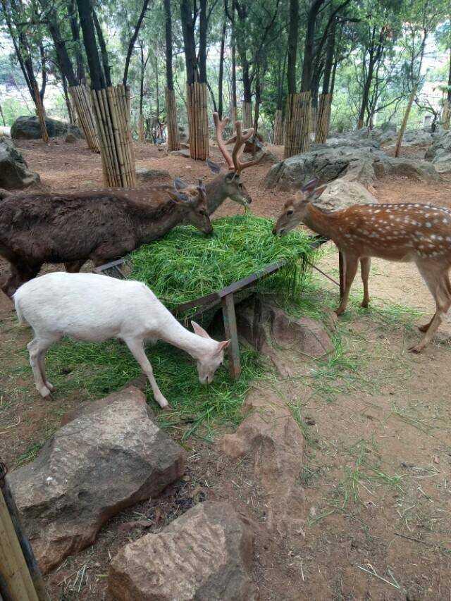 园内展出了动物140多种,在这些珍禽异兽中有云南特有的西双版纳野牛