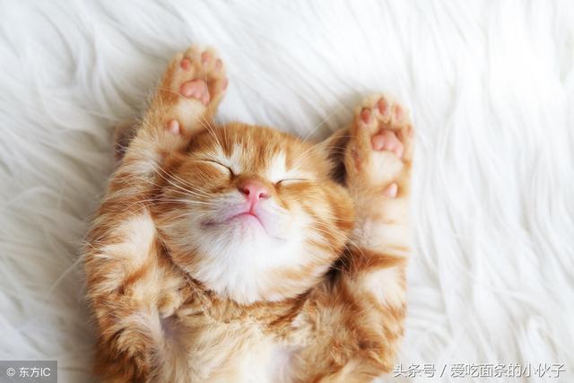 懒猫的睡姿被发现,所有动物都笑了