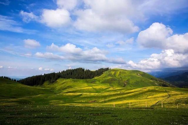 伊犁风景的图片