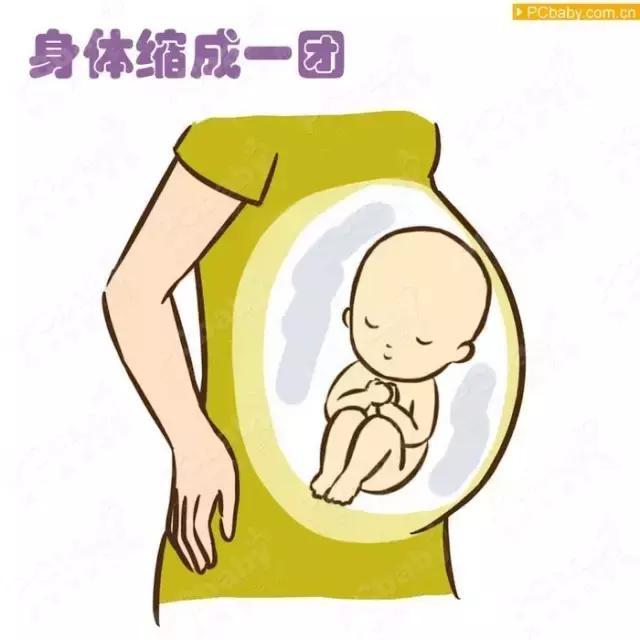 这里有一组非常可爱的宝宝胎动示意图:有各种宝宝动的样子,很有趣!