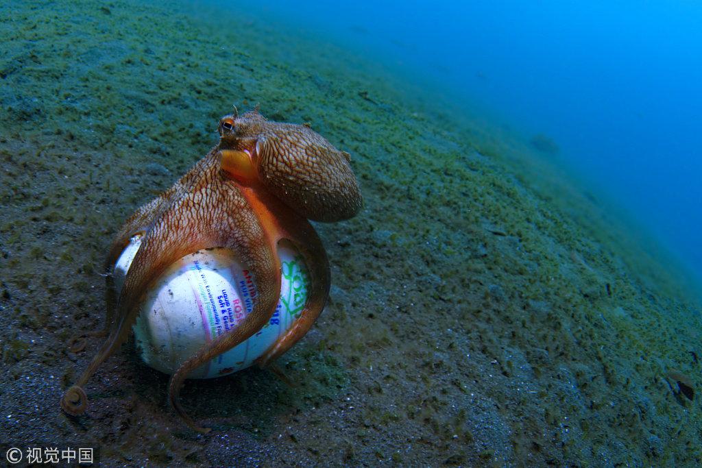 """蜗居也废物再利用印尼一章鱼""""猴子""""废弃动物盒三只肥皂电影剧照图片"""
