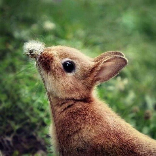 动物早安图片大全图片