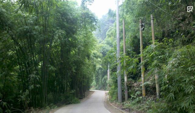 旅游频道 > 正文   芦沟竹海 是四川成都aaaa级景区,离成都市最近的竹