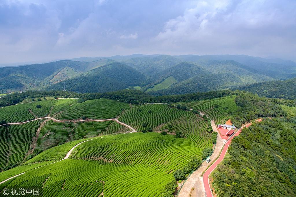浙江湖州:航拍乡村道路 满眼碧绿风景秀美
