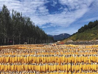 首个必备节北京推介40乡村游好去处英语初中丰收单词图片