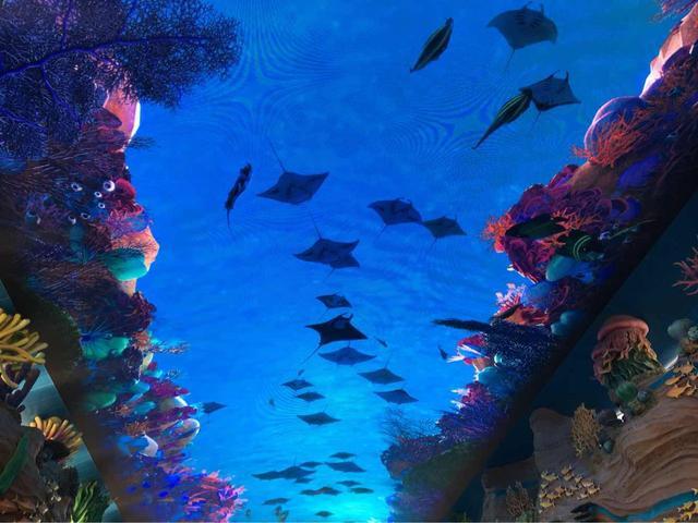 【玩乐足迹】实地探访全球最大海洋主题公园—长隆海洋王国,从早到晚玩了一半