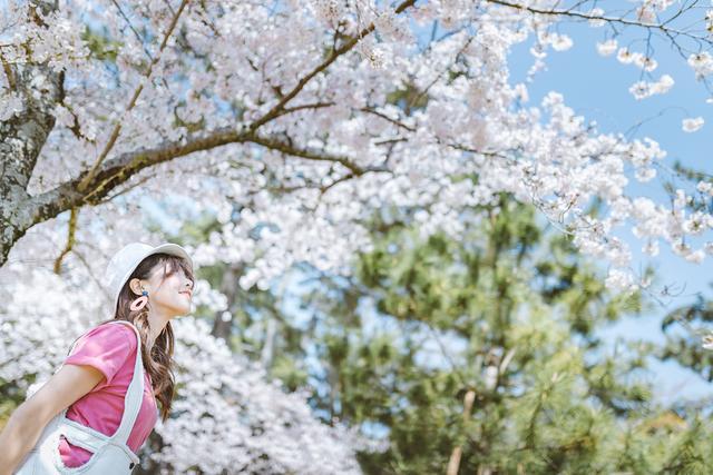 【世界那么大】奈良公园—樱花树下,与小鹿有个约定