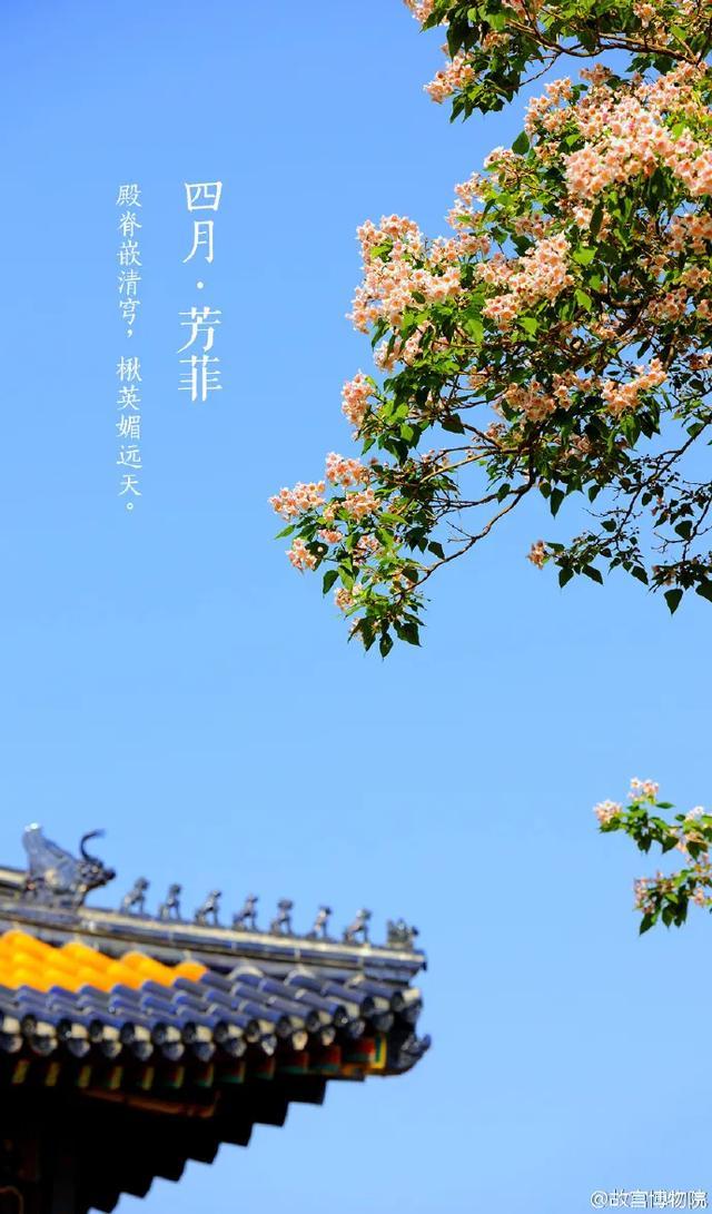 [玩乐足迹]故宫600年首直播:春色满园关不住,花开时节动京城