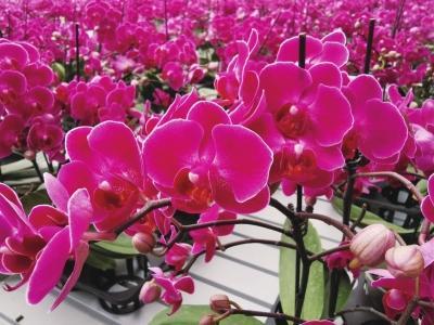 世界那么大▲疫情过后 去新区赏花踏春 四万平方米花卉智能温室十万盆鲜花迎春绽放