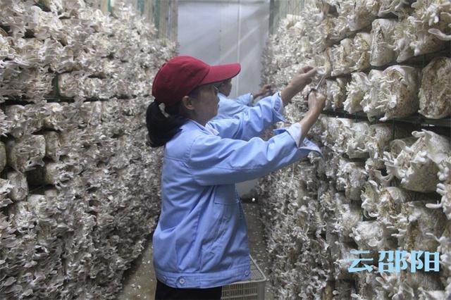 全国党媒信息公共平台农业产业化龙头企业助力农户脱贫致富