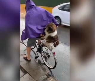 北青网下雨天主人骑车带狗狗回家 网友:像极了小时候的自己