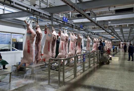 广州日报广州唯一4A中心屠宰场试产!日宰生猪2000多头