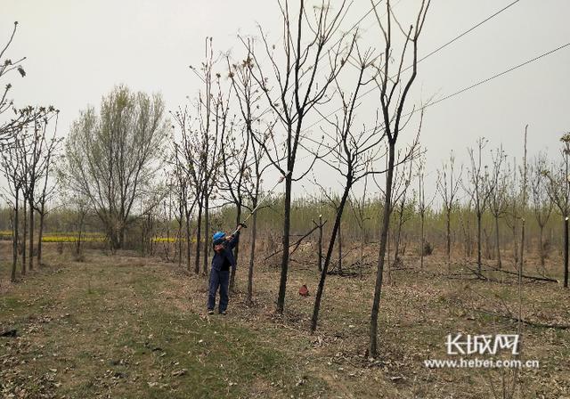 全国党媒信息公共平台■国网清河县供电公司:树障清理保安全