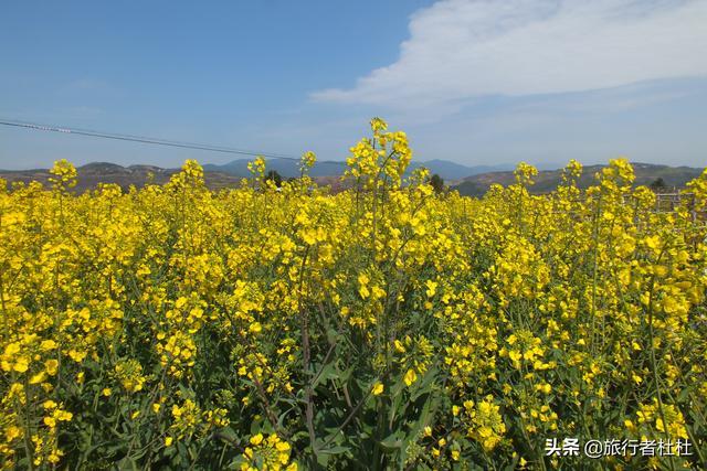 「世界那么大」落在云端的花田世界--宁波宁海 · 桑洲镇梯田油菜花