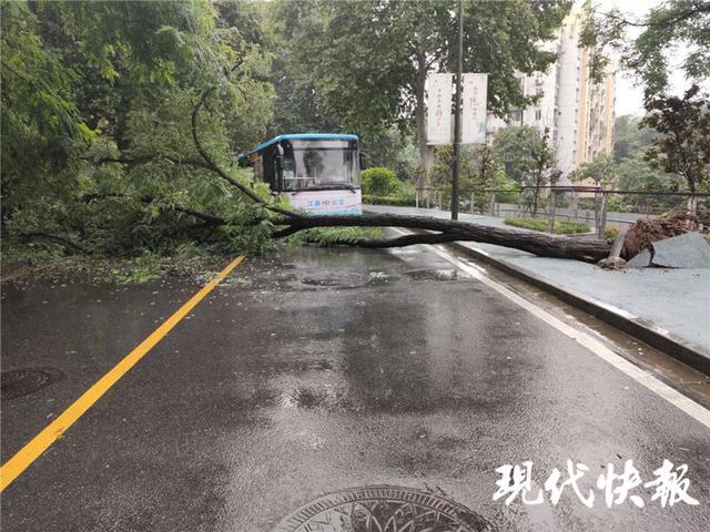 [小闹人车队]注意!南京蒋王庙街一行道树突然倒塌,横在路面导致交通中断