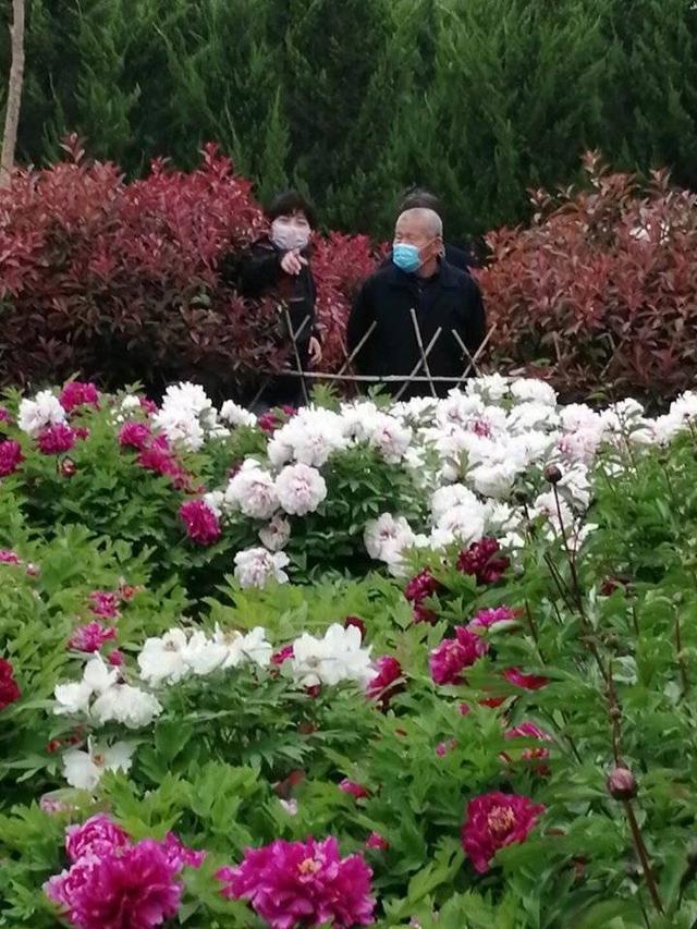 趣旅游▲牡丹那么美,我想年年带你看花开