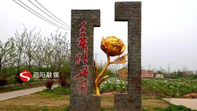 泗阳:牡丹花开惊艳时光,美了生态富了民