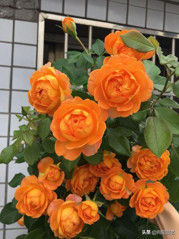 """甜蜜的生活▲春天养花一定要施肥,家庭备用这""""3类肥"""",所有的花都能用"""
