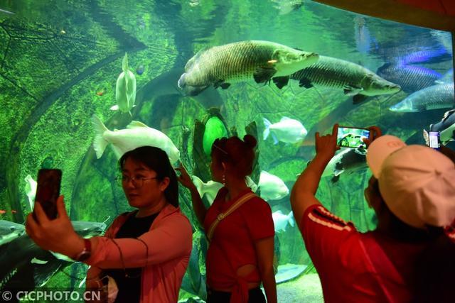 #新华社#海南三亚:探秘水族馆