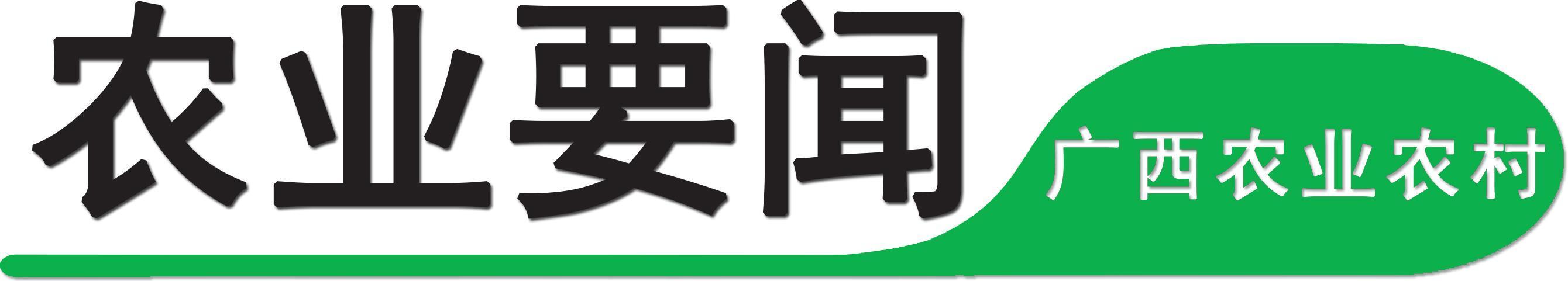 「旅行百事通」金城江区打造龙江沿岸荷花景区