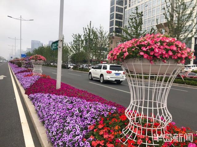 世界那么大■风景在路上:青岛海口路附近沿海一线鲜花拥簇