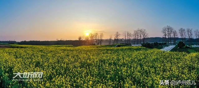 【旅行百事通】春回大地 泸州油菜花开绿意浓