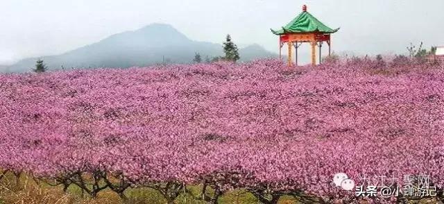 约吗旅行@春天的永修凤凰山,十余万株桃花竟相绽放,千株梨花和玉兰花点缀