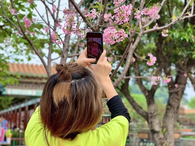"""[旅行柚子君]又是一年浪漫樱花节,来一场穿越时空的""""樱""""缘邂逅!"""