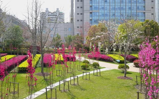 『约吗旅行』在上海虹口且行且看花花