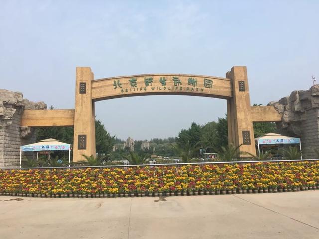 #旅行柚子君#北京野生动物园,和动物来一场亲密的接触,让孩子回归大自然