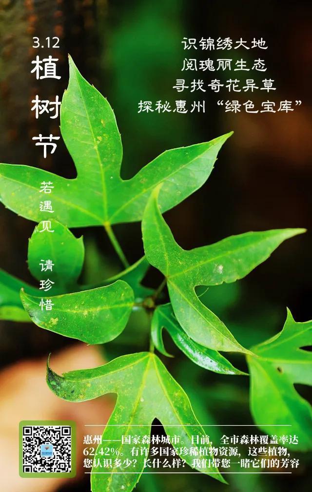旅行柚子君@涨知识!惠州这些珍稀植物,你认识几个?