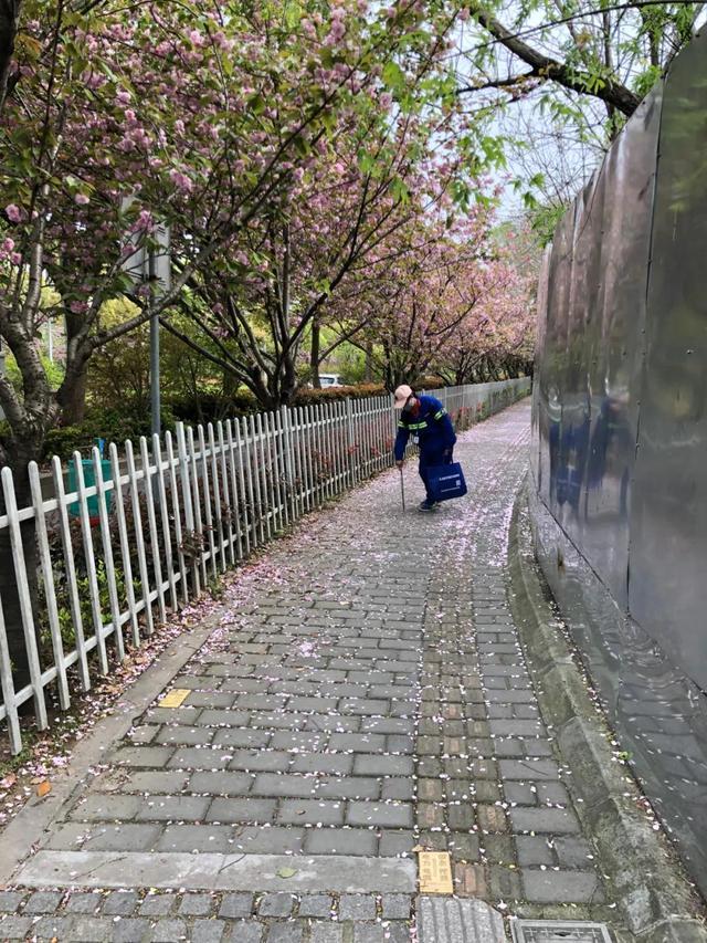 """文汇网▲上海首条""""落樱不扫""""道路诞生!700米长""""樱花路""""只限定5天哦"""