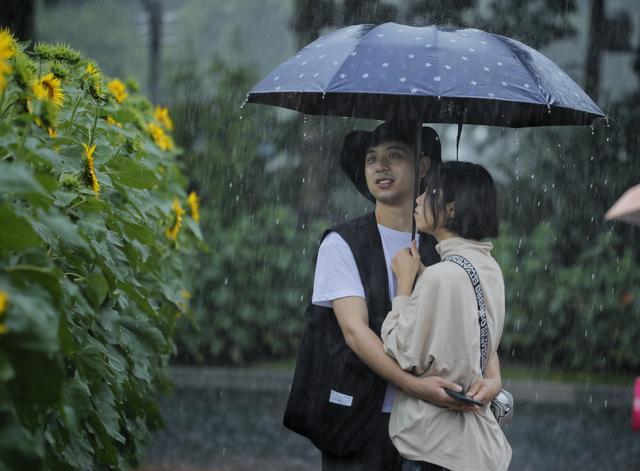[世界那么大]图集|雨中赏葵,别有情趣