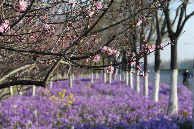 【旅行百事通】阳春三月花盛开 又是一年春好时