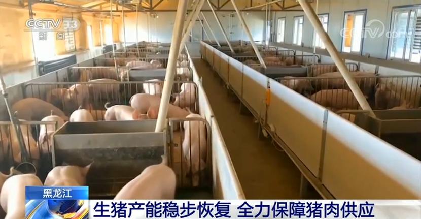 央视新闻客户端黑龙江生猪产能稳步恢复 全力保障猪肉供应