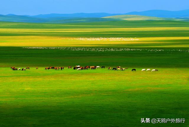 """【约吗旅行】马背上奔驰100公里,在""""牧草王国""""呼伦贝尔大草原上撒野"""