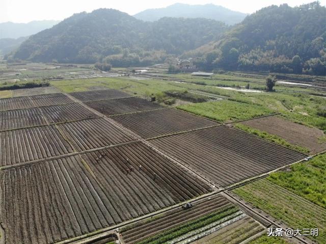 约吗旅行▲中国绿都 最氧三明   三明又将有一片花海可赏了!占地约93亩,就在这个地方