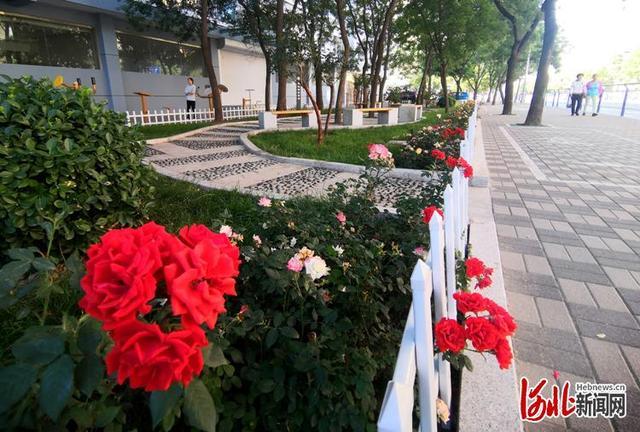 """河北新闻网享受更多绿色福利 衡水市区今年建40处""""口袋公园"""""""