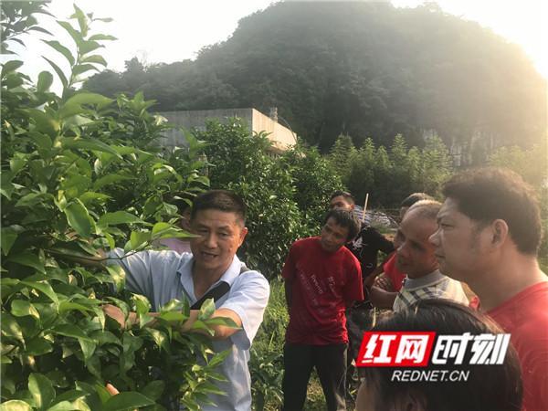 """红网江永县科协组织农技专家到田间地头""""传经送宝"""""""