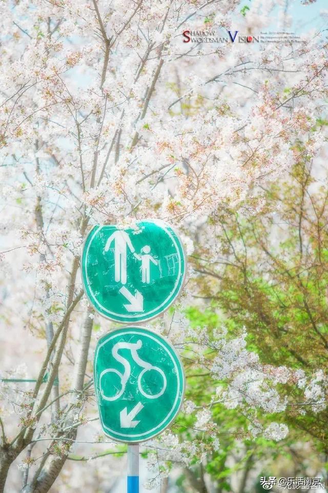 约吗旅行■在南京,我发现春天来了的25个证据!