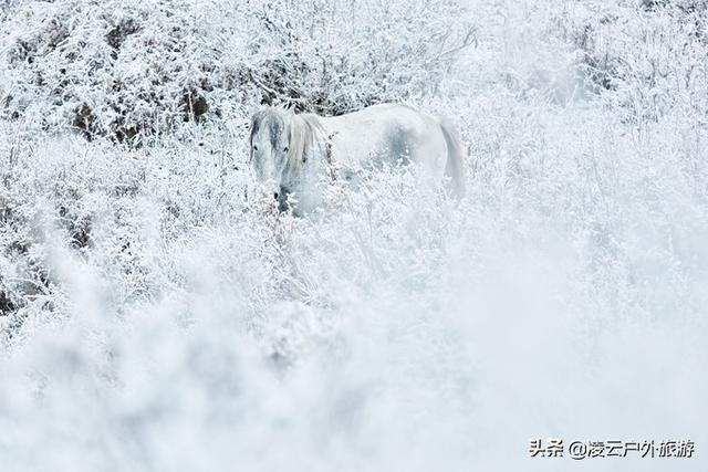 旅行柚子君:禾木,村庄白雪皑皑,一片茫茫
