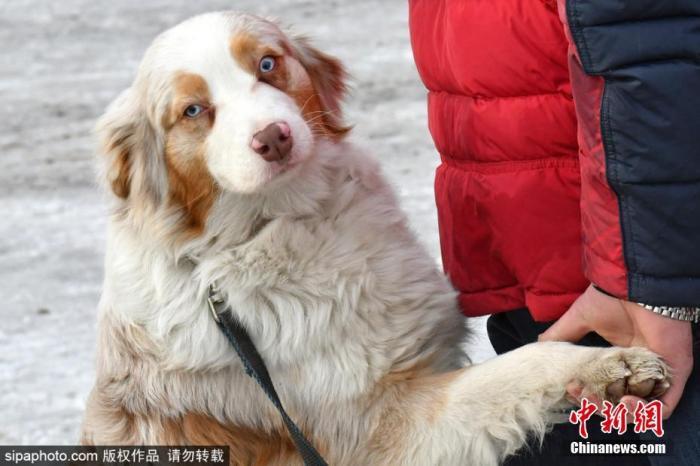 【中国新闻网客户端】狗不在畜禽养殖正面清单,不能养了?农业农村回复