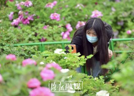 「世界那么大」洛阳牡丹公园:百年牡丹花开正艳